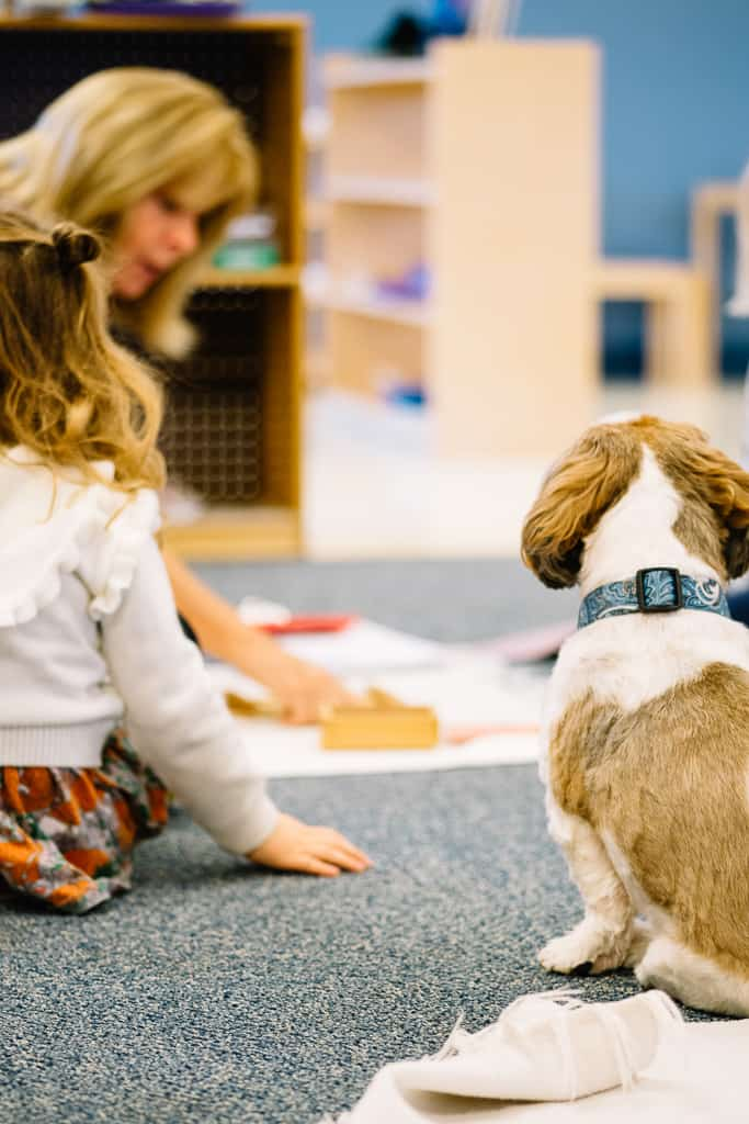 montessori teacher presents a work while class dog watches